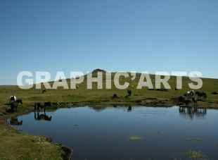 reproduction-photo-camargue.jpg