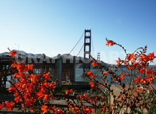 reproduction-photo-golden-gate.jpg